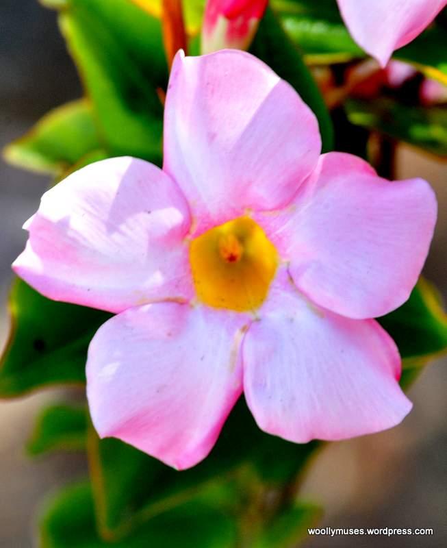 flower_0457