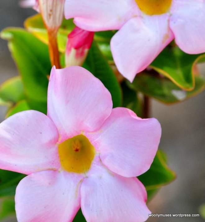 flower_0458
