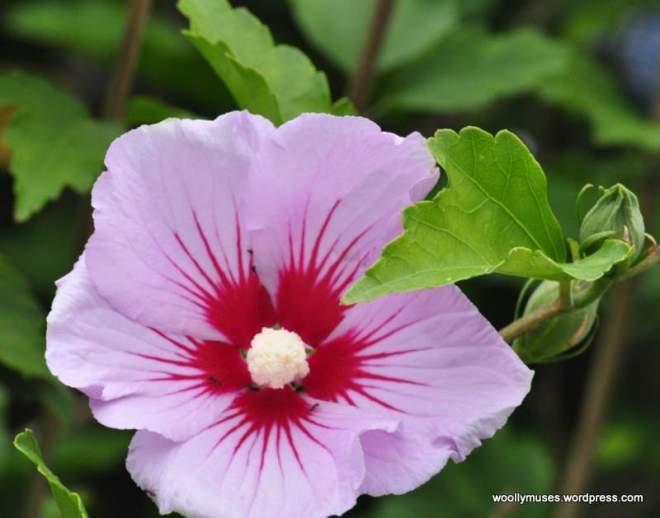flower_0559