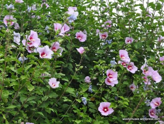 flower_0560