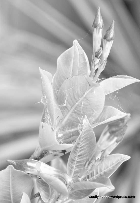 flowers_0240