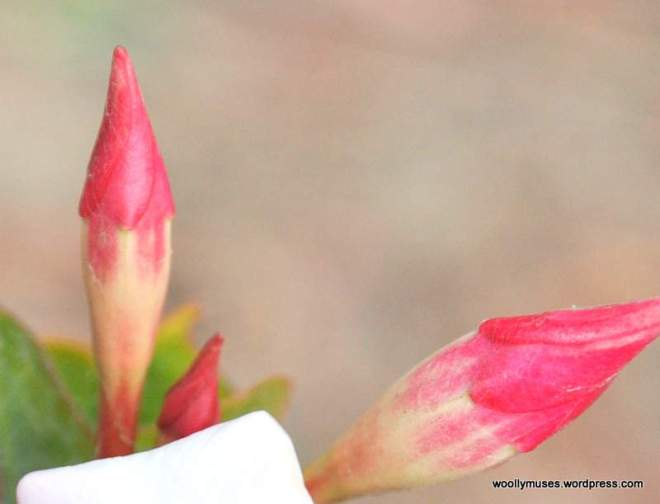 flowers_0248