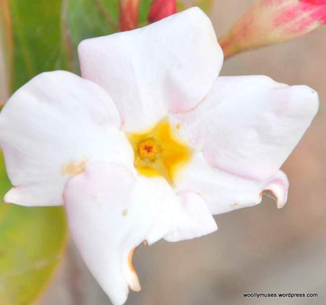 flowers_0250