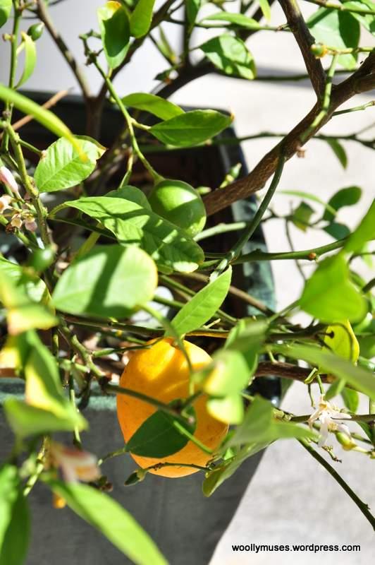 Lemon_0346