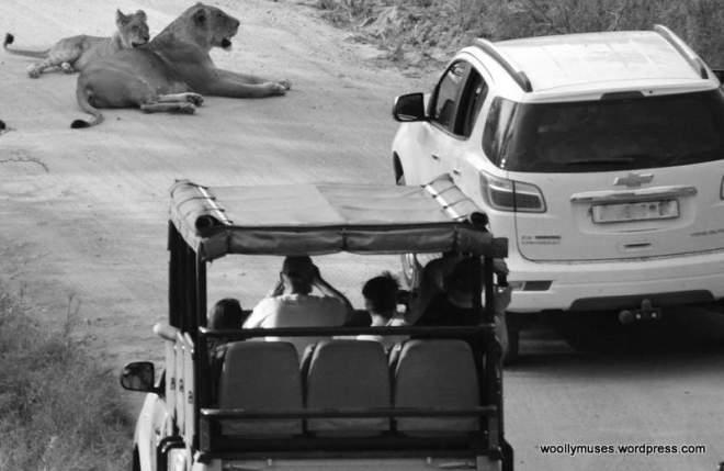 lions_0882