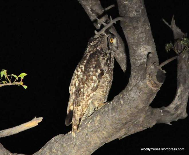 owl_0450