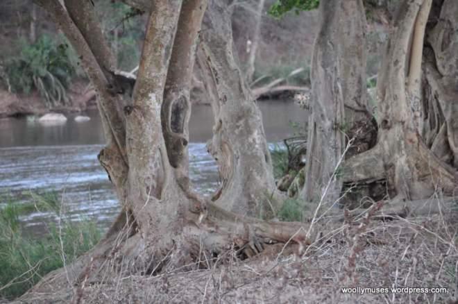 river_0472