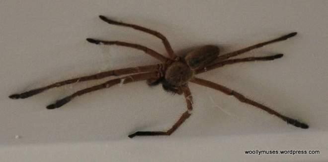 spider_0301