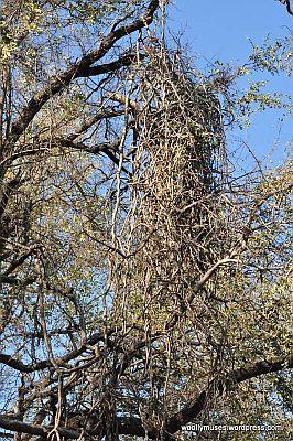 tree_0127