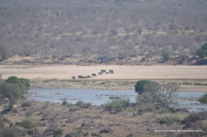 elephant_0403