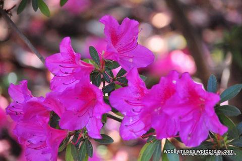 flower_0018