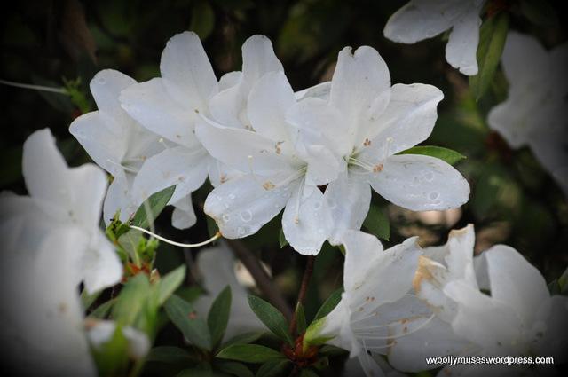 flower_0019