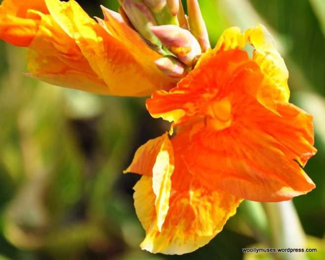 flower_0305