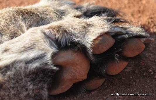 foot_0196