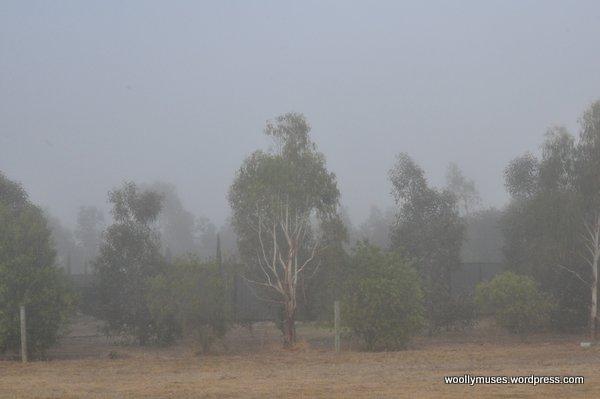 trees_0426