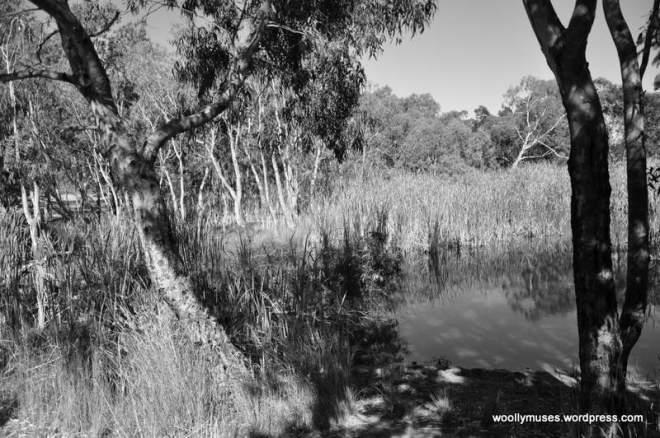 lagoon_0459