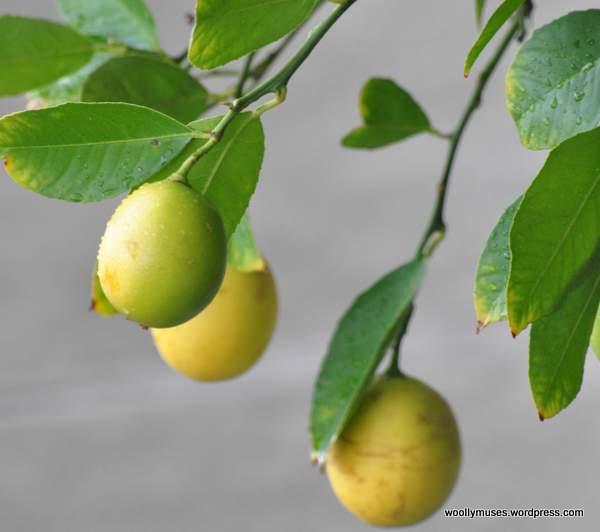 lemon_0755