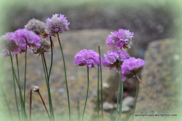 pink_0762