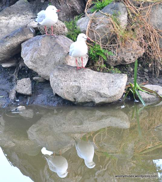 seagull_0908