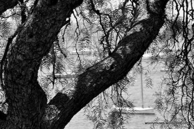 tree_0494
