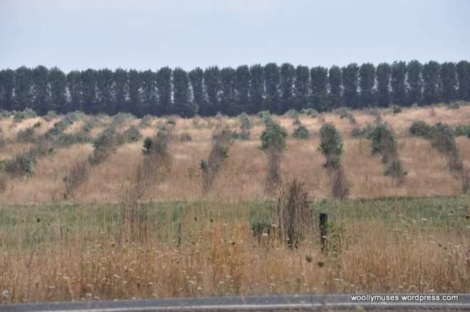 trees_0490
