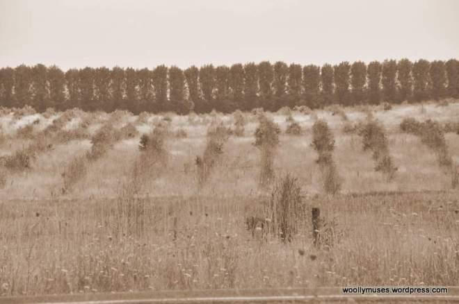 treess_0490