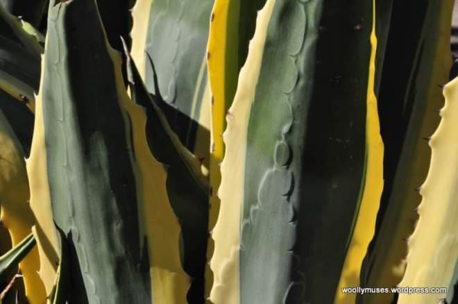 cactus_0054