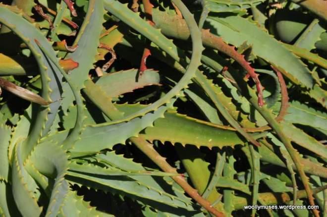 cactus_0057