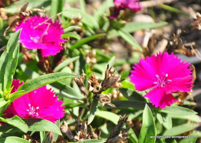 flower14_0179