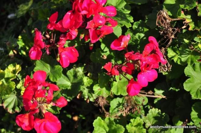 flower14_0181