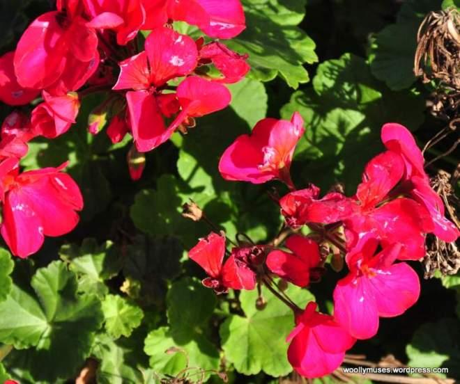 flower14_0181A