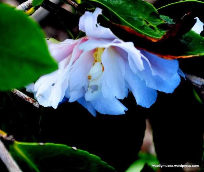 flower14_0187