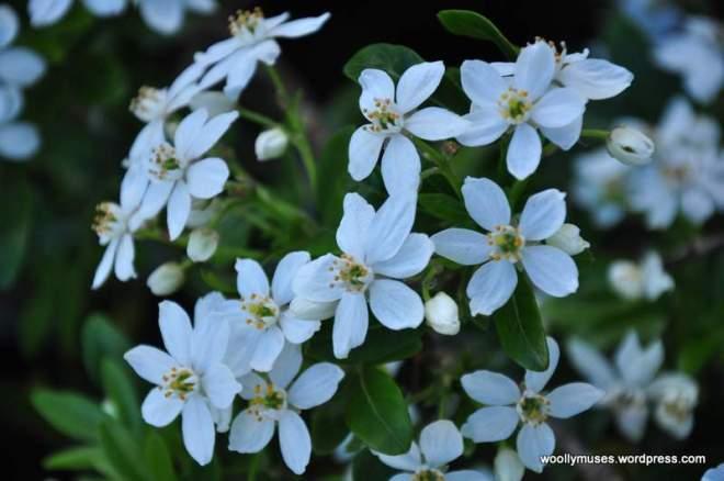 flower14_0212