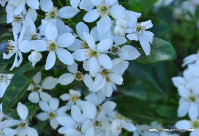 flower14_0215