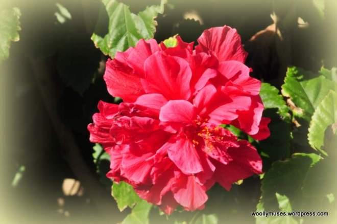 flower_0050