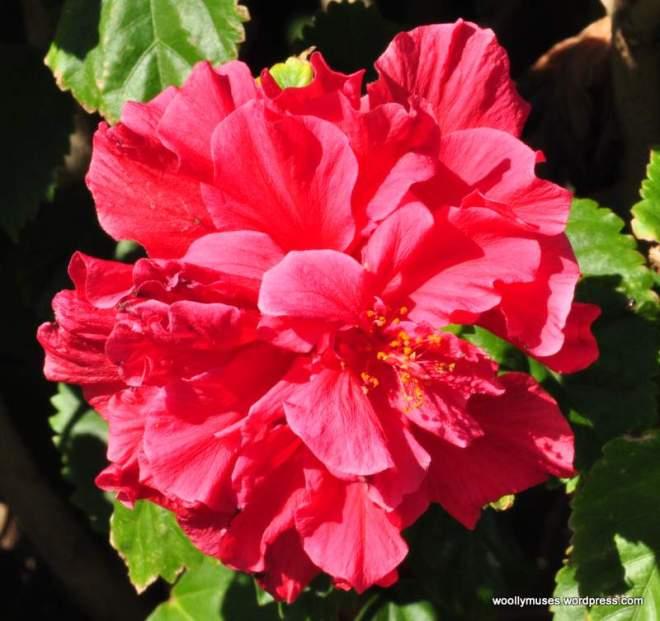 flower_0051