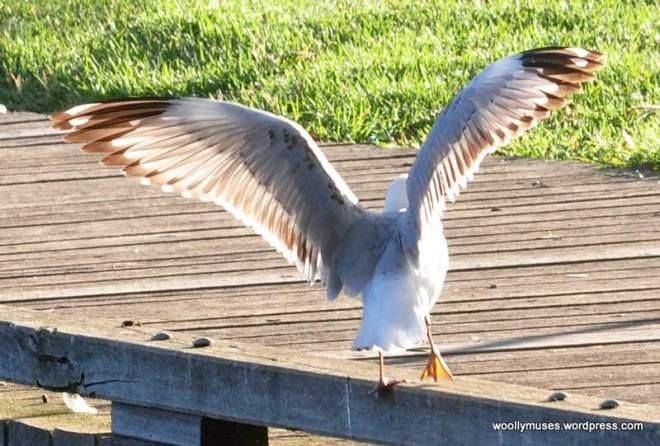 sea-gull_0130