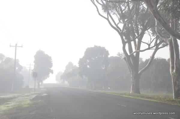 tree-mist_1871