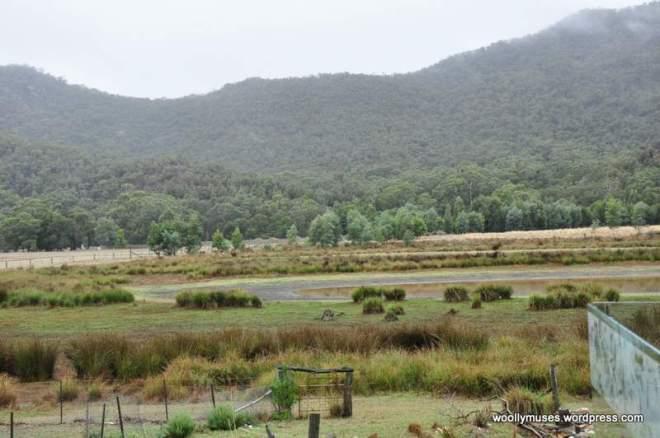 wetland_0178