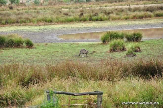 wetland_0179