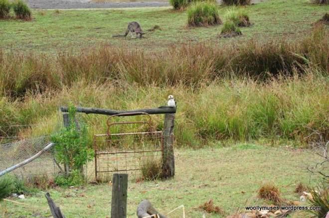 wetland_0181