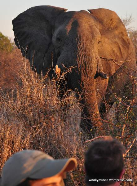 elephant_0055