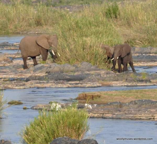 elephants_0593