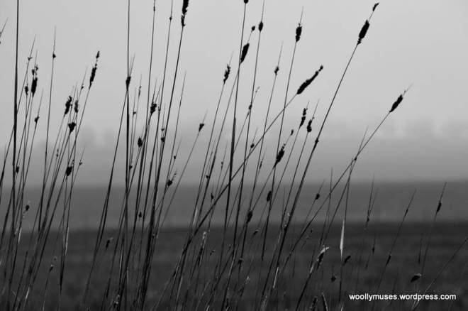 fog_0022