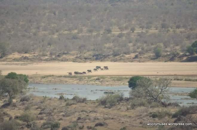 olifants_0403