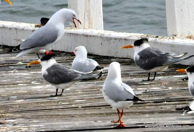 seagull_0021