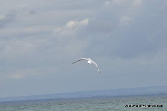 seagull_0030