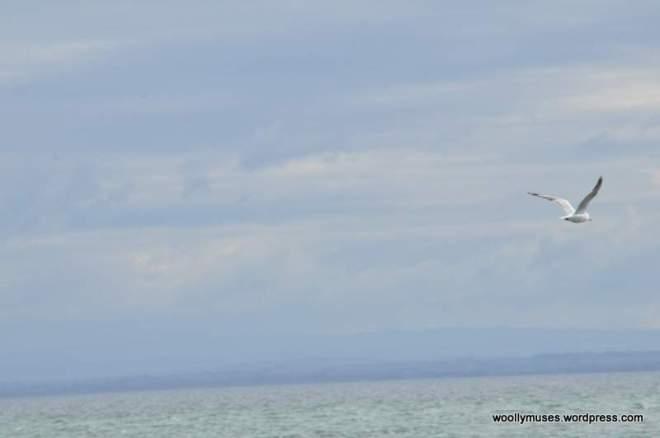 seagull_0034