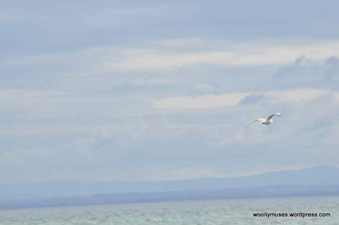 seagull_0035