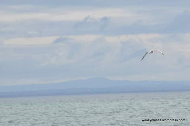 seagull_0036